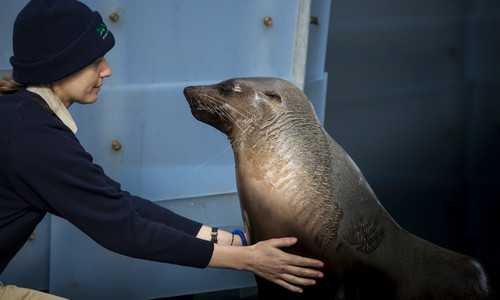 Seal with her keeper