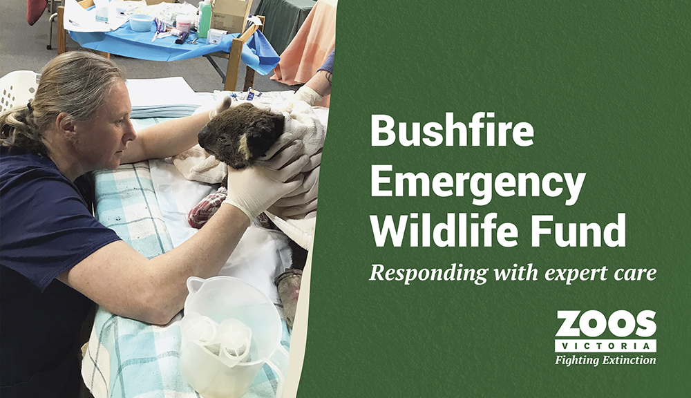 Bushfire Emergency Wildlife Fund
